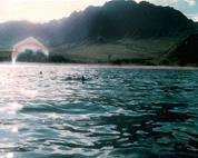 Crystal Dolphin Rainbow Arc