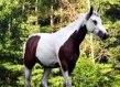 Improve Animal Communication With EFT