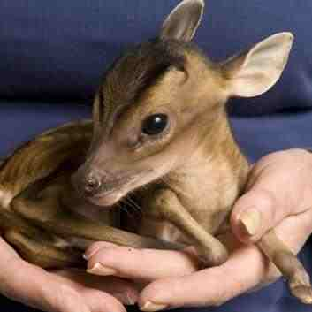 EFT For Animals Who Are Sick Or Suffering