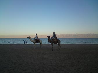 Red Sea Retreat Camel Rides