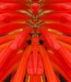 Flower Being 2008