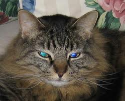 EFT For A Sick Cat & Her Owner