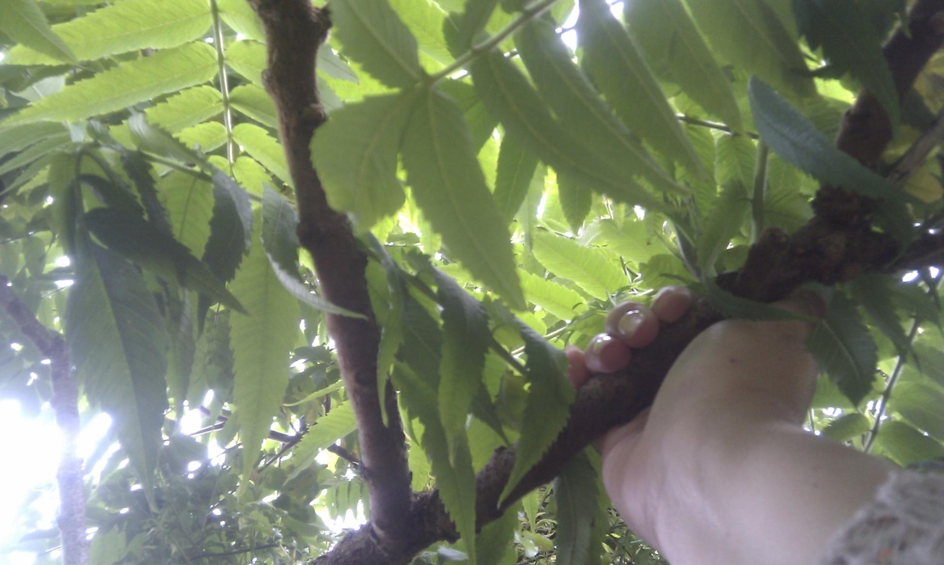 Tree in my garden