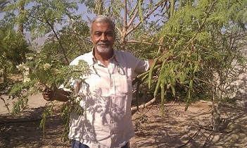 Maged and his Organic Moringa Trees