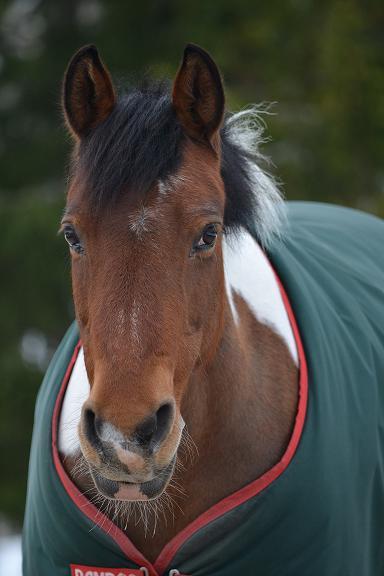 Horse Phobia Case Story
