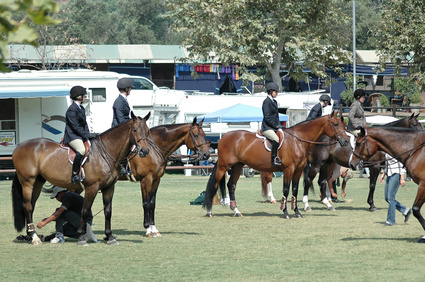 horse riders, equestrian